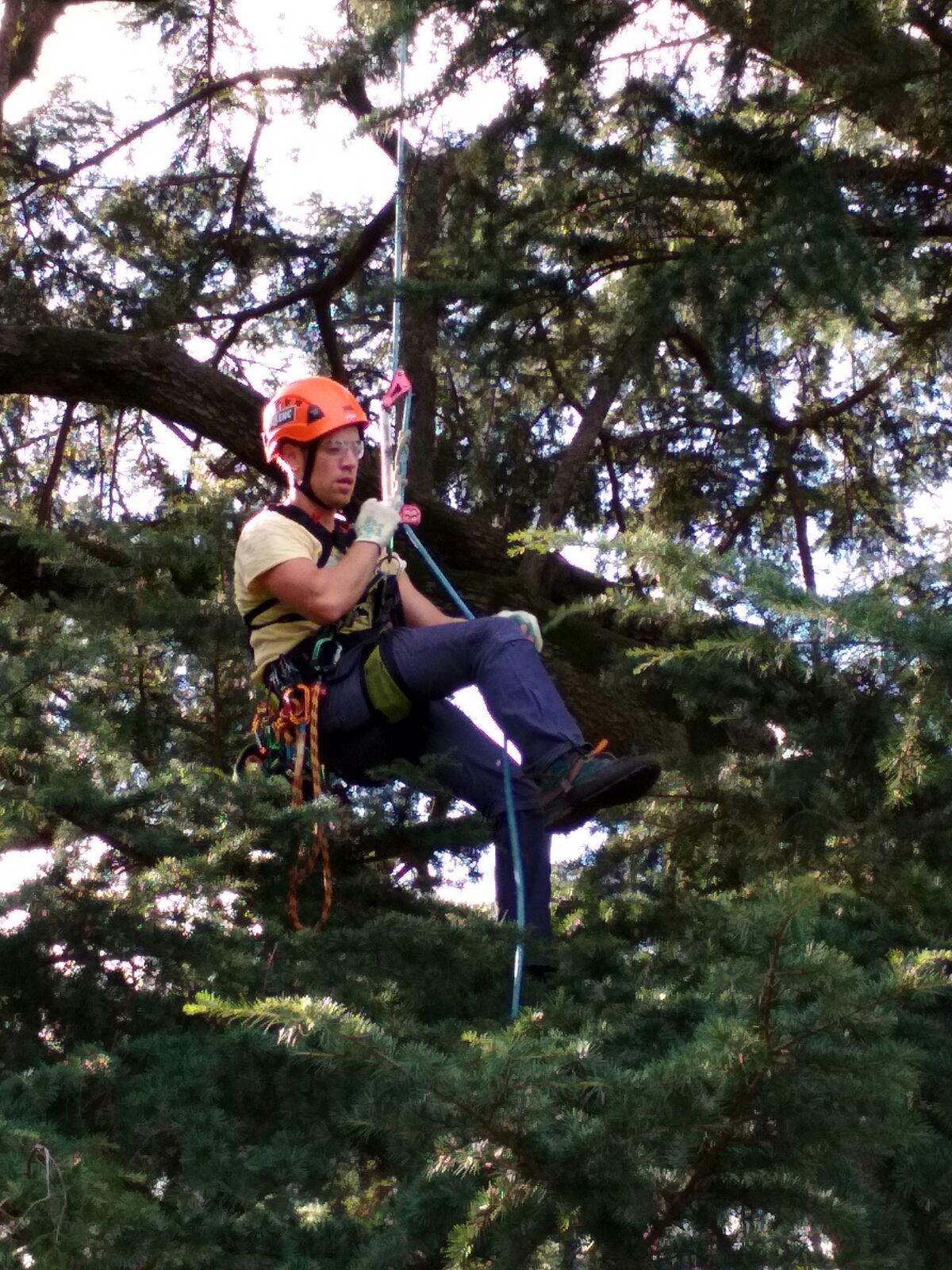 Tobias Pelli & Pellenc al primo posto nel tree climbing!